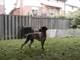 2002-09-backyard