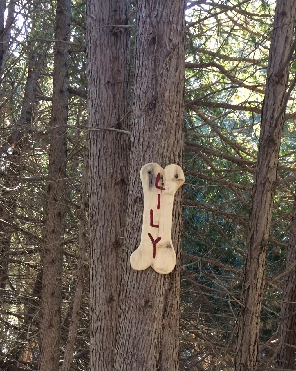 Wooden Bones in the Park