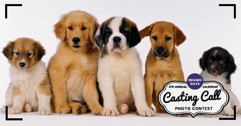 Casting Call!