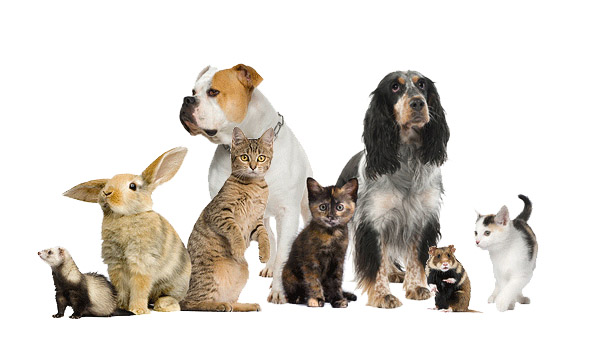 May is Responsible Pet Ownership Month in Oshawa